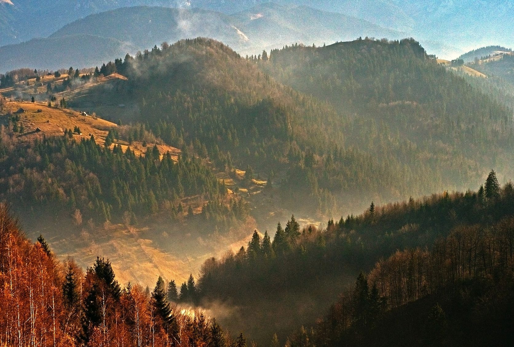 forested hills of romania in evening sun