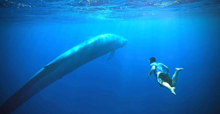Deep blue, deep water swim with blue whales