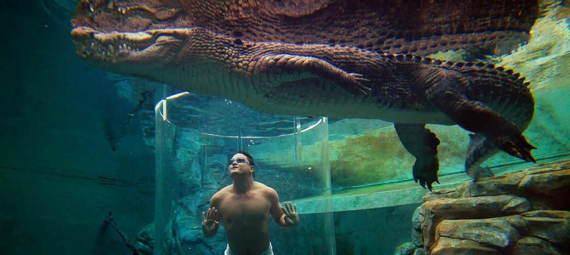 The Cage of Death in Darwin Crocosaurus Cove