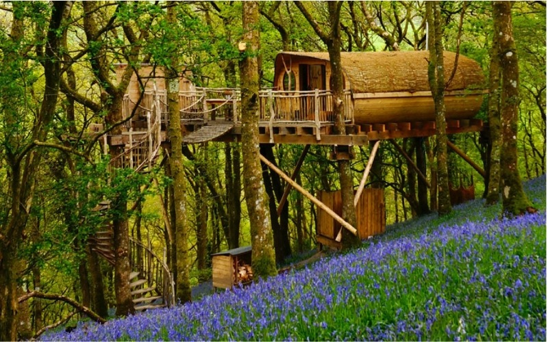 Snuggle Up in a Cosy Welsh Treehouse surrounded by bluebells