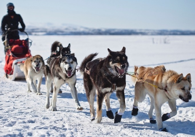 Snowmobiles & Dog Sledding alaska, dogs pulling a sled