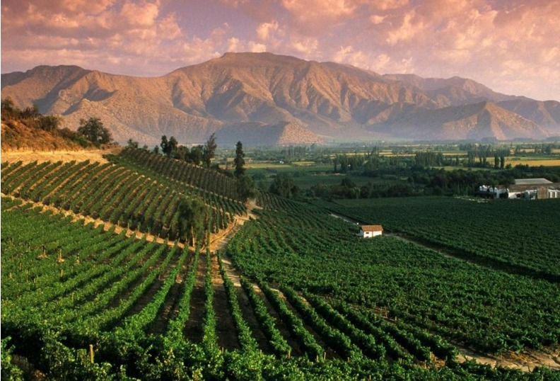 Argentina Mountains and Wineries tour winery
