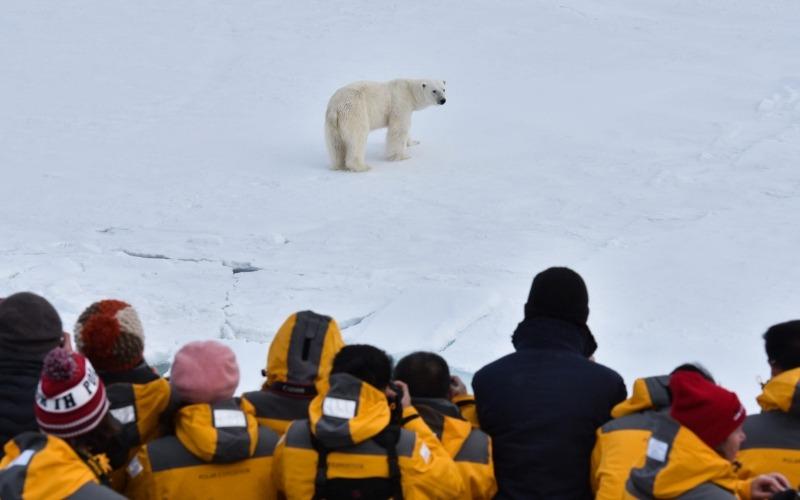 Confused polar bear on North Pole Arctic Adventure