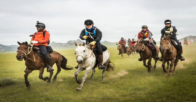 Horses at The Mongol Derby