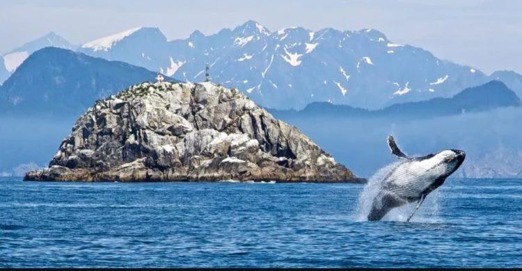 Alaska and whale