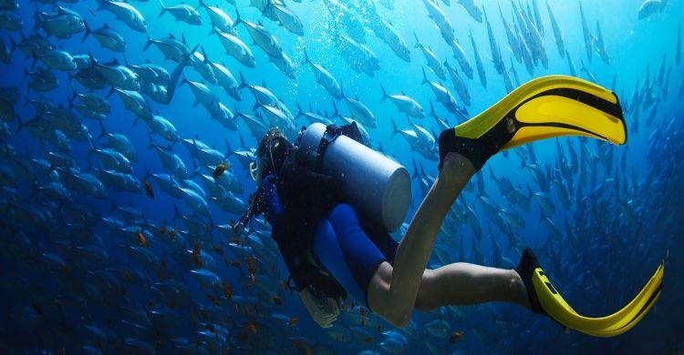 Diver in deep water in view of many fish