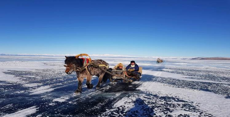 Horse on the frozen ice carrying support items
