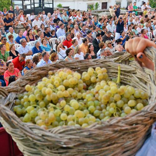 National Grape Harvest Festival, Argentina