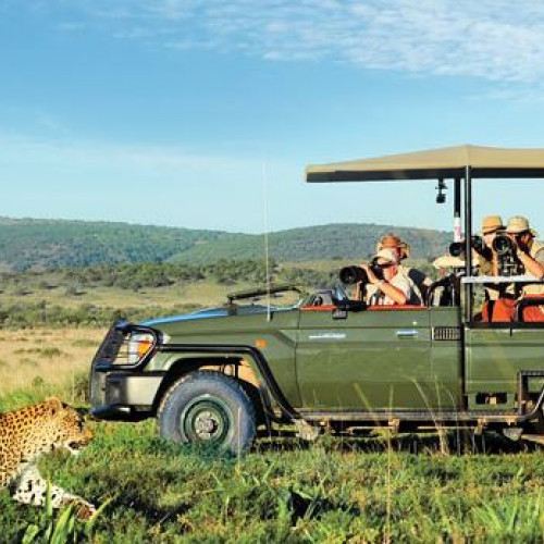 Visitors on a safari jeep watching a leopard at African safari reserves