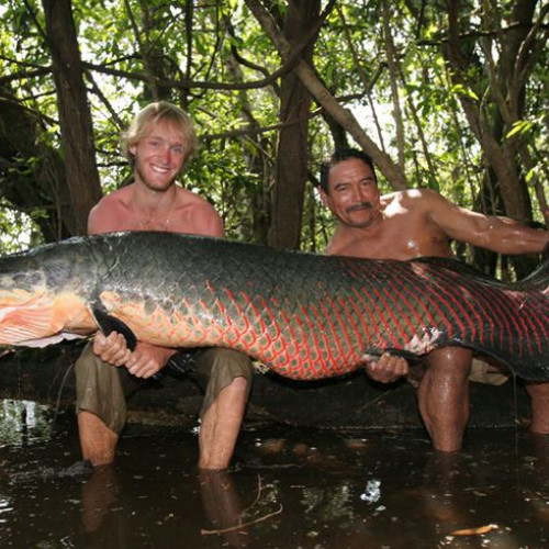 Amazon Fly Fishing. Men holding a massive fish.