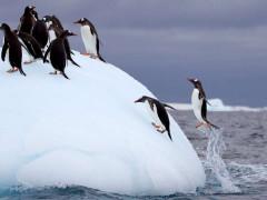Penguins on an Antarctic Adventure