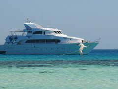 bird flying in front of white liveaboard diving motor yacht