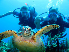 Honduras Liveaboard Diving Turtle Selfie