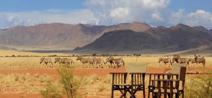 Zebras Spotted While Namib Desert Dune Dreaming