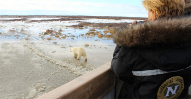 guest watching polar bear from side of boat at Tundra Lodge