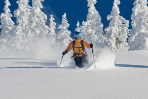 Skier in deep powder with snowy trees in Tyrol, Austria