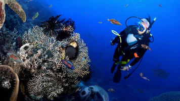 Scuba diver looking at tropical fish and coral on Mozambique Ocean Safari